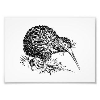 Kiwi Bird Art Photograph