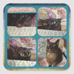 Kiwi en una caja, serie 1, cuatro imágenes pegatina cuadrada