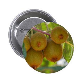 kiwi on tree pinback button