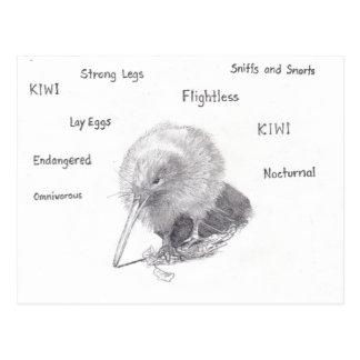 Kiwi out for a walk postcard