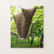 Kiwifruit Bee Hive Puzzle