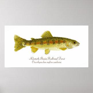 Klameth Basin Redband Trout Poster