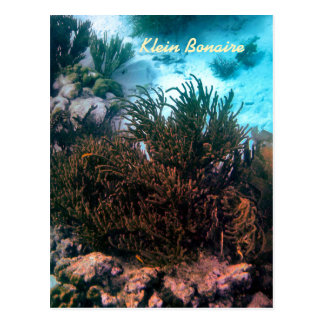 Klein Bonaire Postcard