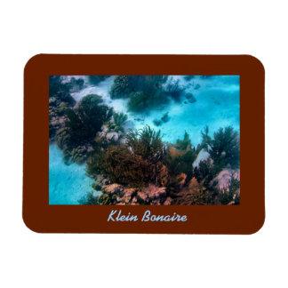 Klein Bonaire Reef Magnet