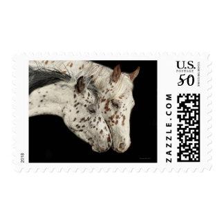 Knabstrupper Colts Postage Stamp