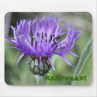 Knapweed mouse mat mouse pad