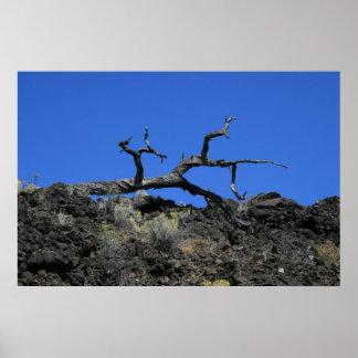 Knarled Tree Poster