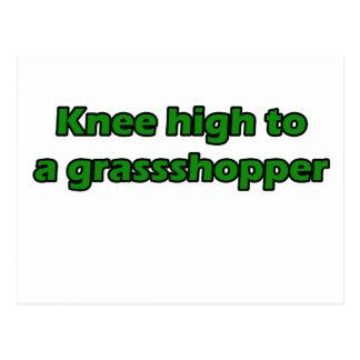 Knee high to a grasshopper postcard