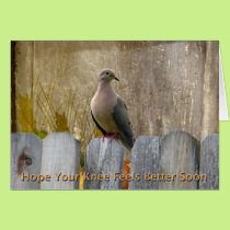 Knee Surgery Get Well Soon Love Dove Card