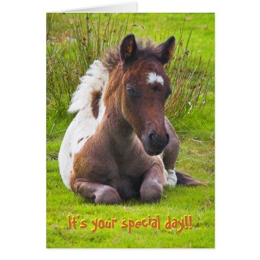 Kneeling Dartmoor Pony Foal birthday card Card