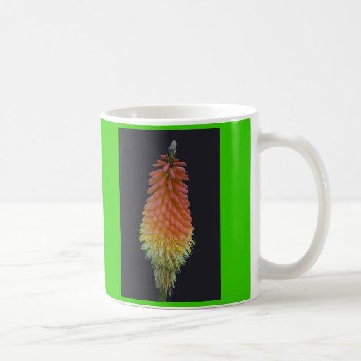 Kniphophia # 219 tazas de café