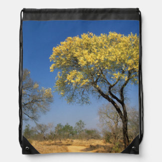 Knob Thorn Acacia, (Mimosoideae), Mala Mala Game Backpacks
