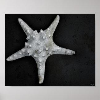 Knobby Starfish Poster