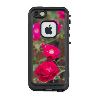 Knock Our Rose Case