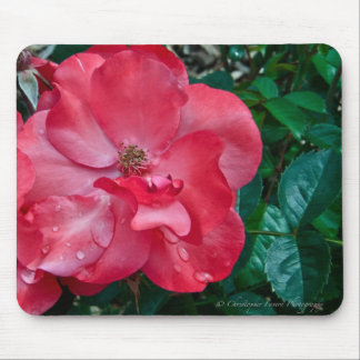 Knock out Red Rose mousepad