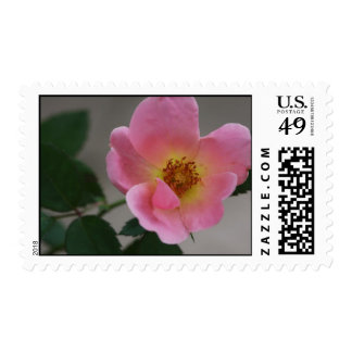 Knockout Rose Postage