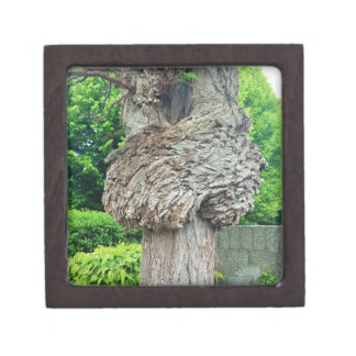 Knot on Tree Trunk, Knar, Nature Green Gift Box