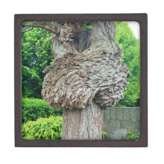 Knot on Tree Trunk, Knar, Nature Green Jewelry Box