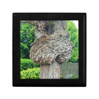 Knot on Tree Trunk, Knar, Nature Green Keepsake Box