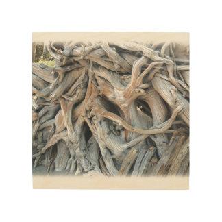 Knotty Tree Root Image Printed on Wood Wood Wall Art