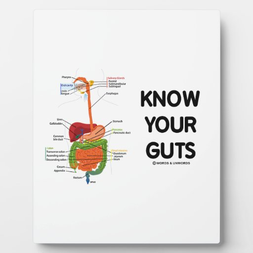 Know Your Guts (Digestive System Anatomical Humor) Display Plaques