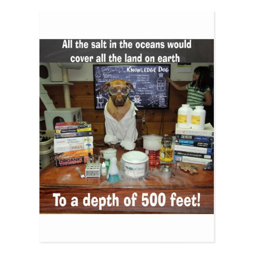 Knowledge Dog Salt in the Oceans Post Cards