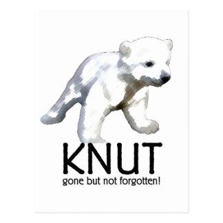 Knut Polar Bear Postcard