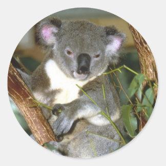 koala2 pegatina redonda
