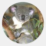 koala2 pegatinas redondas
