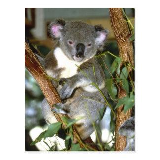 koala2 tarjeta postal
