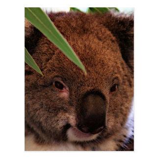 Koala 1115P Postcard