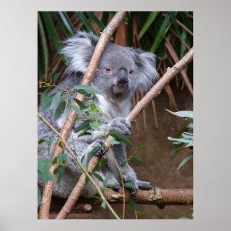 Koala 14 poster
