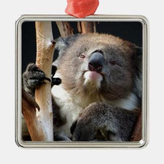 Koala 1 adorno navideño cuadrado de metal