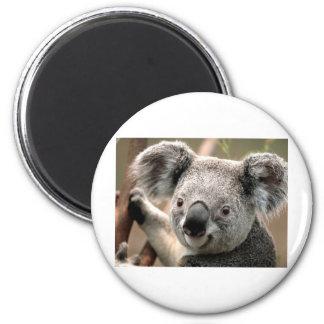 Koala 2 Inch Round Magnet