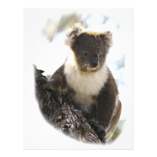 Koala 2 plantillas de membrete