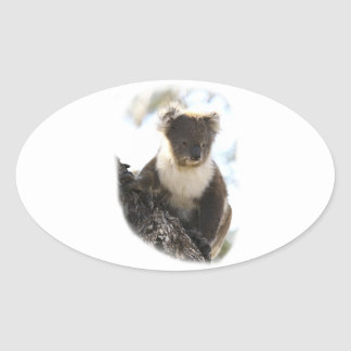 Koala 2 oval sticker