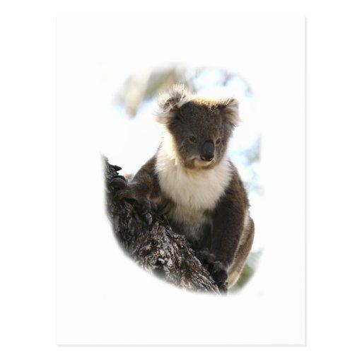 Koala 2 postales
