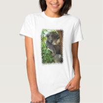 koala-34.jpg tee shirt