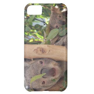 Koala adorable de la madre y del bebé