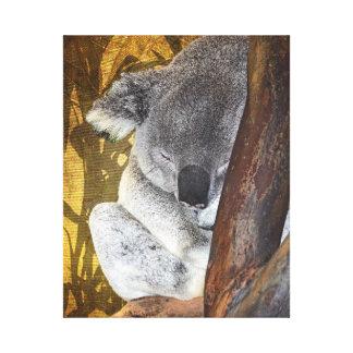 Koala adorable Napping Lienzo Envuelto Para Galerias