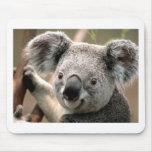 Koala Alfombrilla De Raton