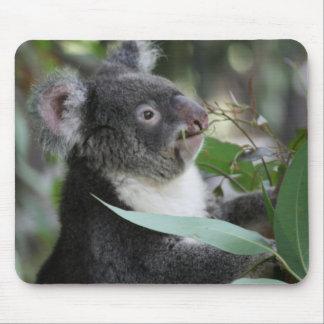 Koala Alfombrilla De Ratones