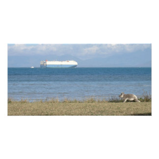 Koala and container ship card