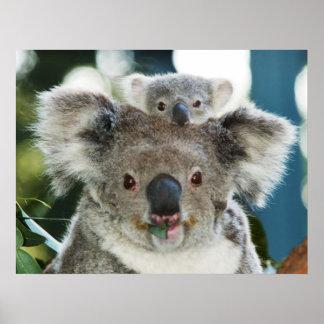Koala and Cub Poster