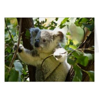 Koala asombroso linda del bebé en un árbol tarjeta de felicitación