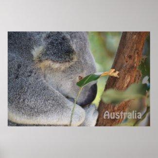 Koala Australia print