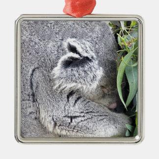 Koala australiana encantadora el dormir adorno de navidad