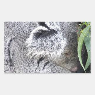 Koala australiana encantadora el dormir rectangular pegatinas