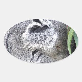 Koala australiana encantadora el dormir calcomanía de óval