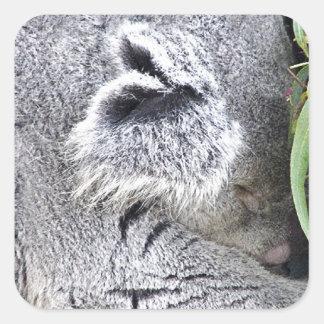 Koala australiana encantadora el dormir pegatina cuadradas personalizada